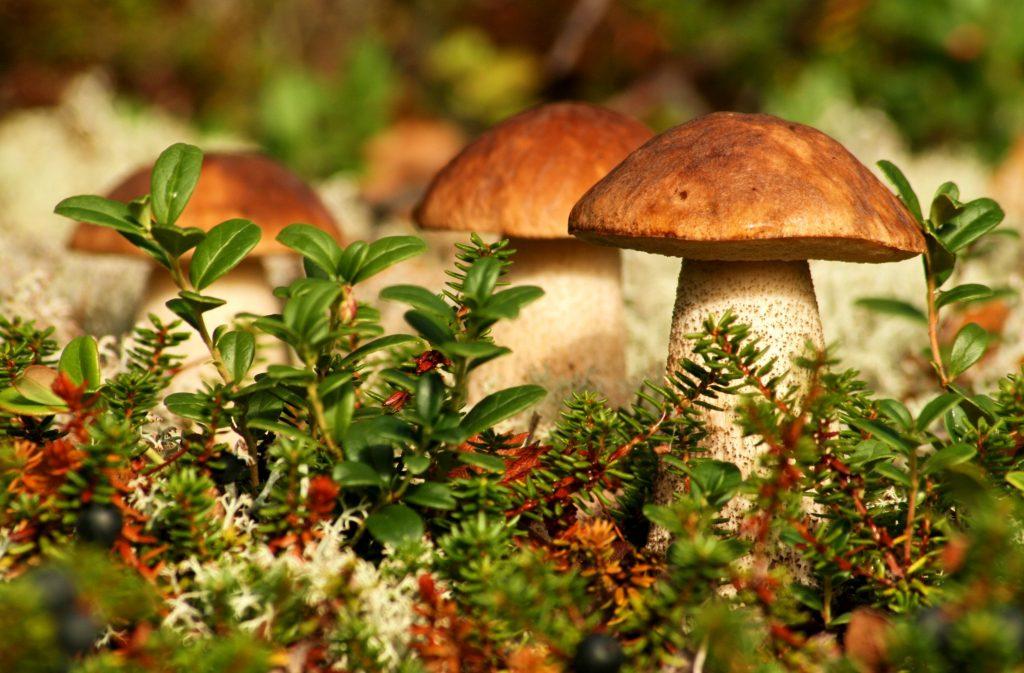 К чему снится сбор грибов беременной 14