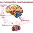 Гипофизарно-надпочечниковая система